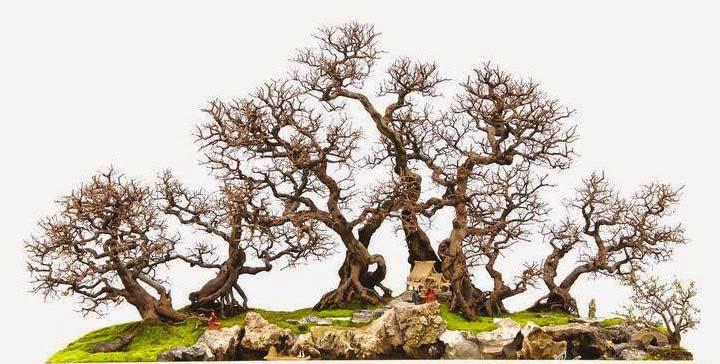 Thế cây bonsai