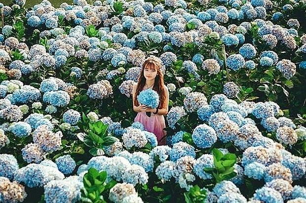 Thành phố nghìn hoa Đà Lạt ghi dấu với những cánh đồng hoa tuyệt đẹp. (Ảnh: Internet)
