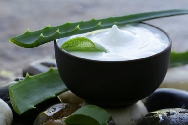 Cách làm mặt nạ nha đam dầu dừa dưỡng da mặt, căng da mặt tốt nhất