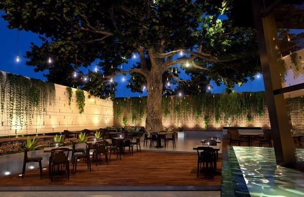 Cách bố trí đèn LED chiếu cây cho quán cafe