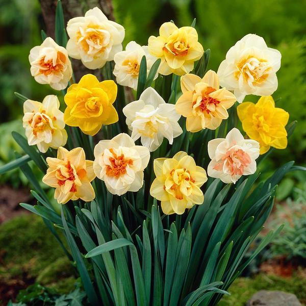 Loài hoa mang ý nghĩa yêu đơn phương