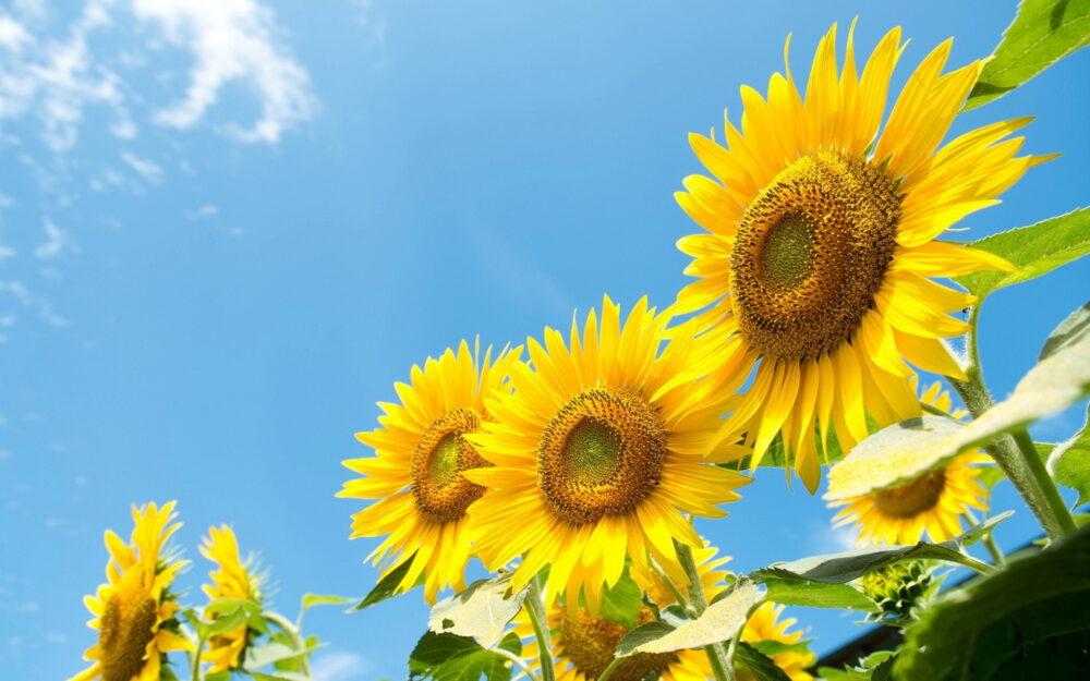 Hoa đẹp TV | Ý nghĩa 7 loài hoa mạnh mẽ - Hoa đẹp TV