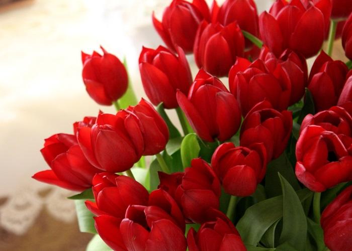 Tulip là một trong những loài hoa tượng trưng cho tình yêu